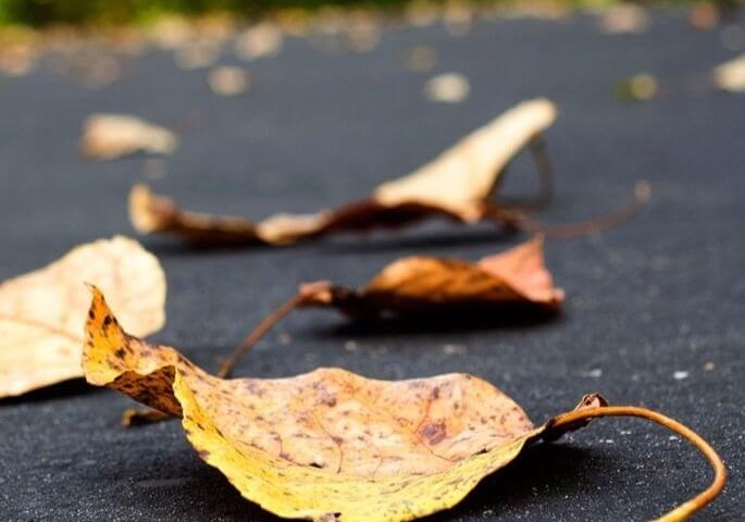 Leaves on paved driveway