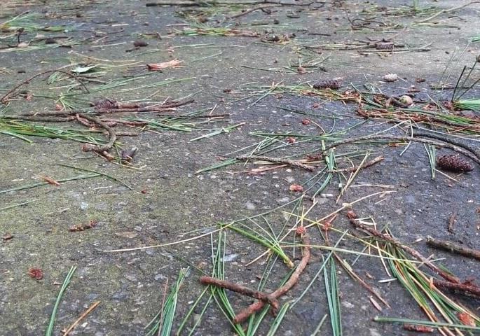 debris on driveway